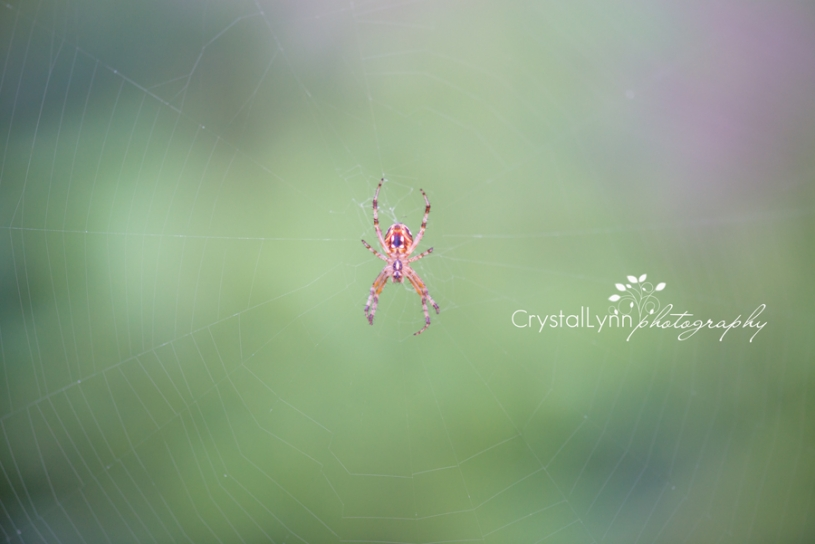 #crystallynnphotography_project52