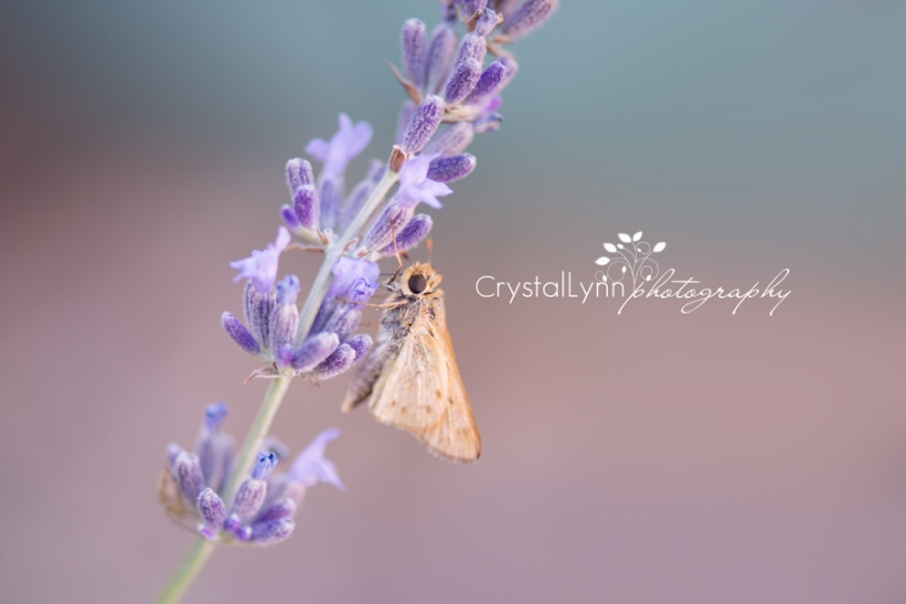 Crystal Lynn Photography